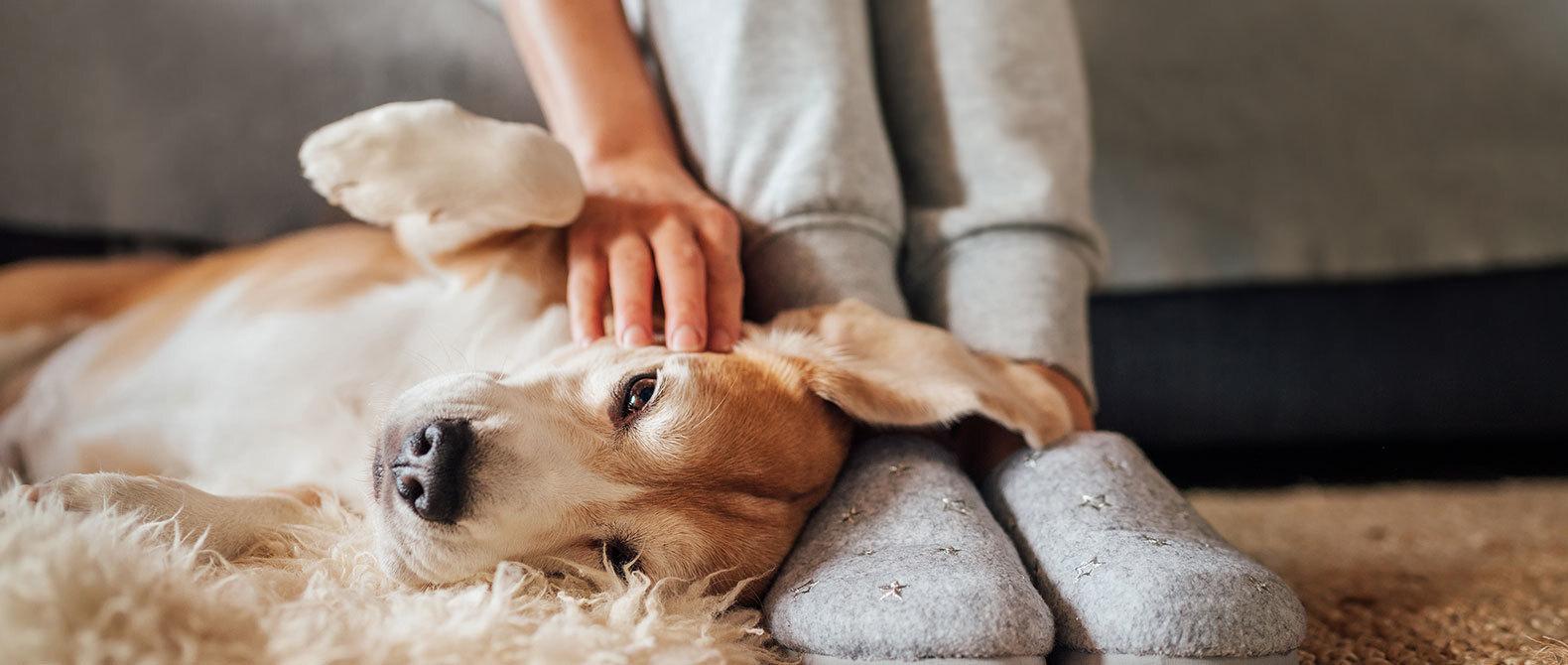 Controle hondenbelasting 2020